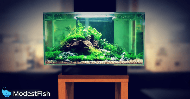 the best betta fish tanks available today (2019 guide & reviews)