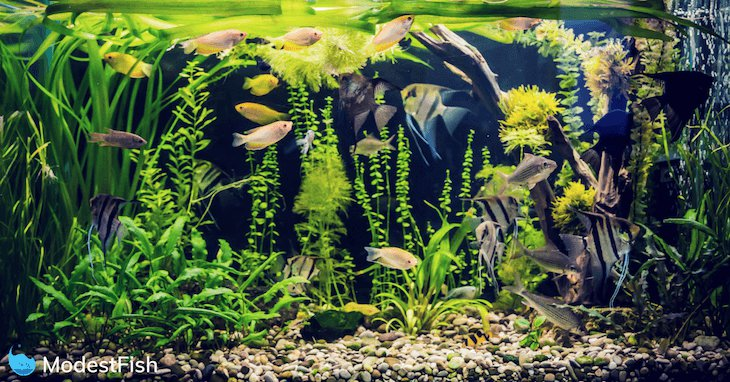 Many fish swimming in a planted aquarium