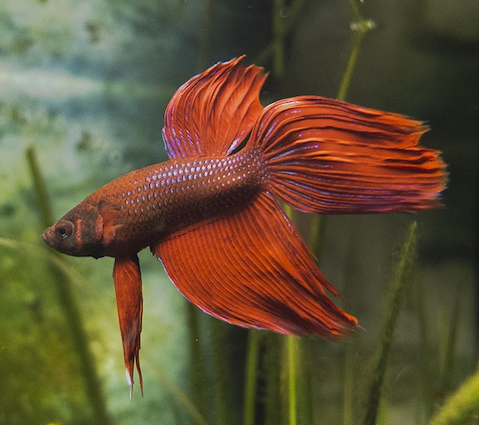 8 Best Freshwater Fish For Beginners Ultimate Guide To Picking Your