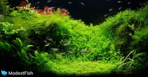 Freshwater Planted aquarium brilliantly lit up by LED lights