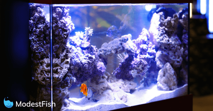 Orange fish swimming in a tank lit by LED lighting