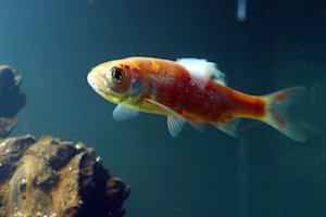 Aquarium Fish Disease Guide: Symptoms & Treatments