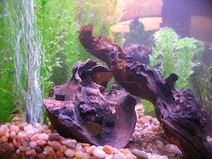 Driftwood being used in a planted aquarium to lower the pH levels
