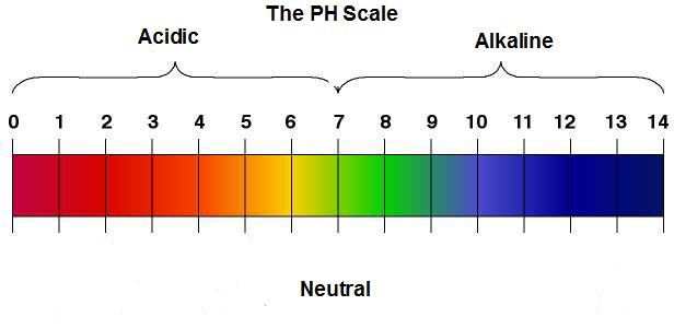 pH scale from 0-14 using color indicators and text showing which levels are acidic and alkaline