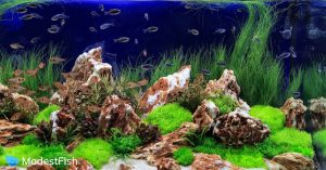 Planted freshwater aquarium with rocks and bright green plants with the best freshwater fish for beginners swimming