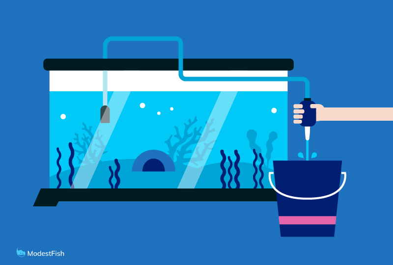 Siphoning aquarium water