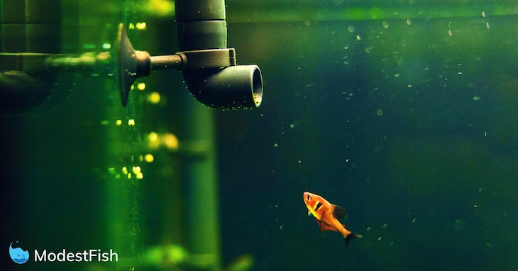 Close up of an orange fish swimming in its aquarium and checking out a water pump