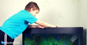 Young boy wearing a blue t-shirt leaning over his fish tank to start the cleaning process