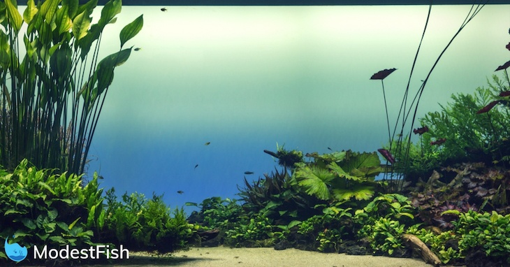 Beautiful tropical planted aquarium with fish swimming