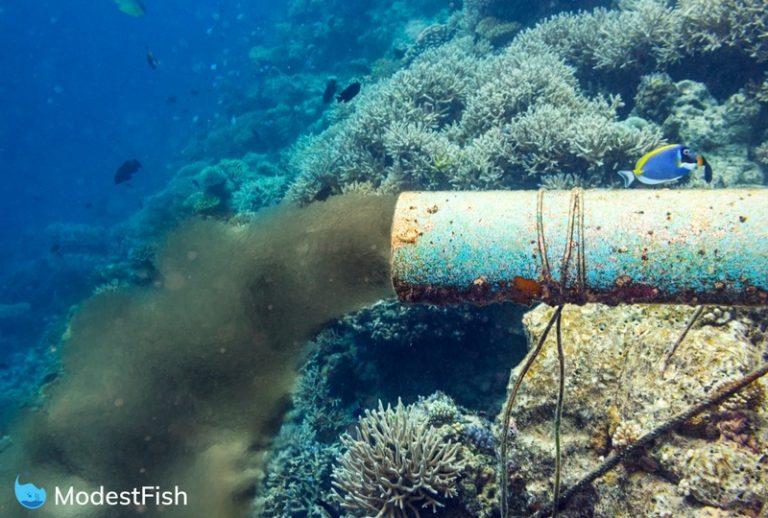 pollution effects on coral reefs images diagram writing Isuzu Wiring Schematic Isuzu Rodeo Wiring Schematic