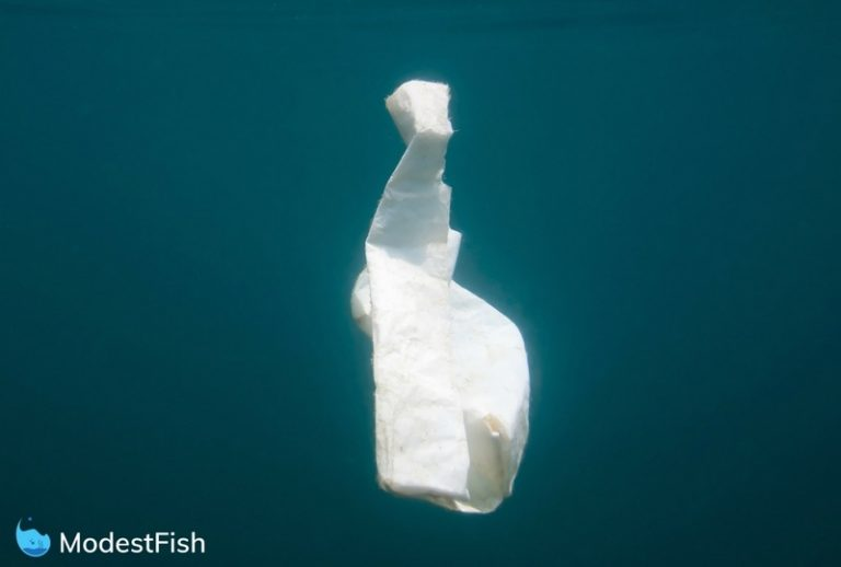 A single plastic bag floating in the ocean