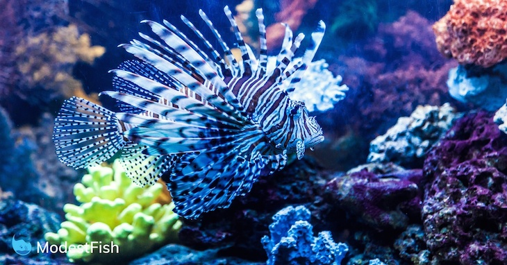 Colorful fish swimming in a reef aquarium with excellent water movement created by a wave maker