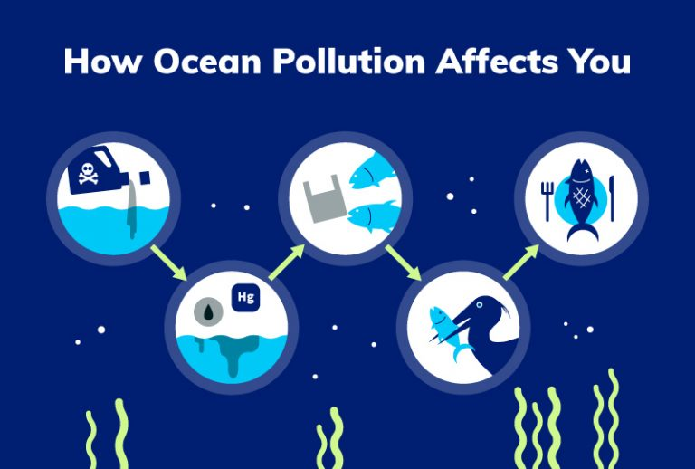 The transfer of ocean pollution from animals to humans