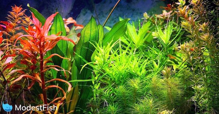 Multi-colored aquarium plants