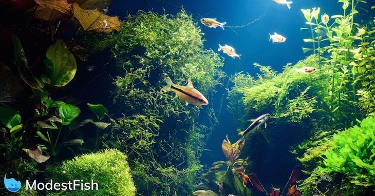 7 best easiest aquarium floating plants for beginners 2019 guide