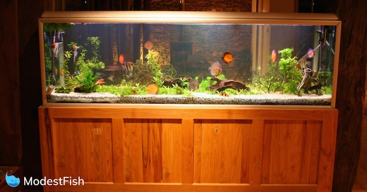 large fish tank on top of a wooden aquarium stand