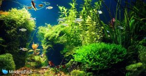 night view of a planted tropical freshwater aquarium