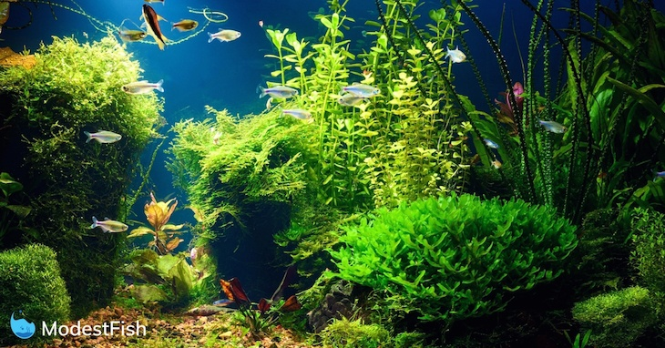 11 Best & Easiest Freshwater Aquarium Plants for Beginners