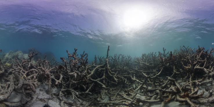 Healthy coral at lizard island