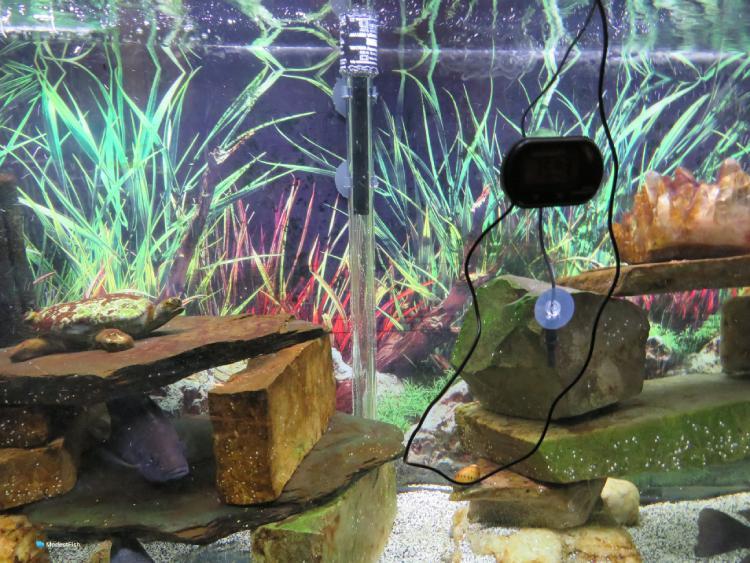 eheim jager aquarium heater submersed in aquarium
