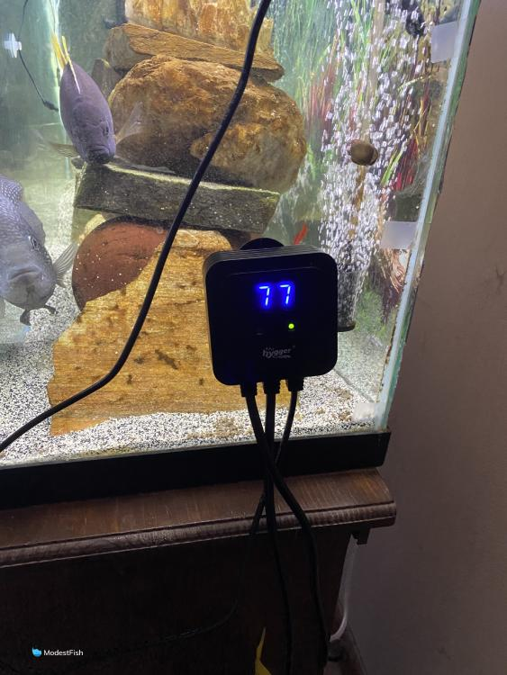 Hygger temperature display on side of fish tank