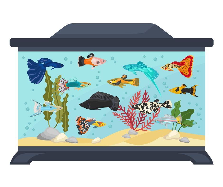 Best 10 Gallon Fish Tank Setup Reviewed