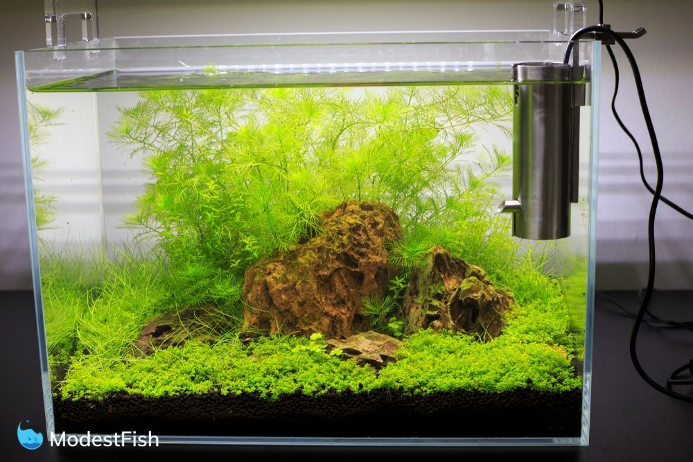 10 Gallon Fish Tank: Guide For Choosing Best Setup, Fish