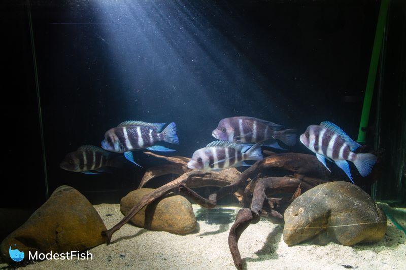 7 Best Aquarium Safe Rocks For Cichlids 2019 Reviews