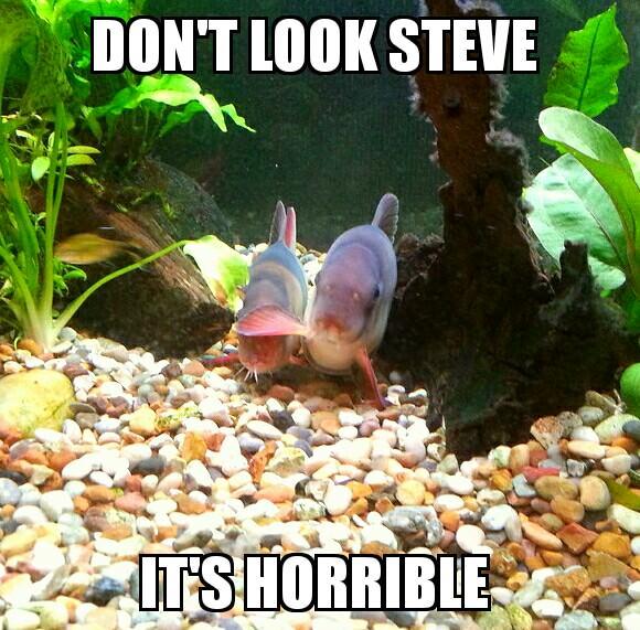 Fish Puns Jokes Memes That Ll Have You Kraken Up