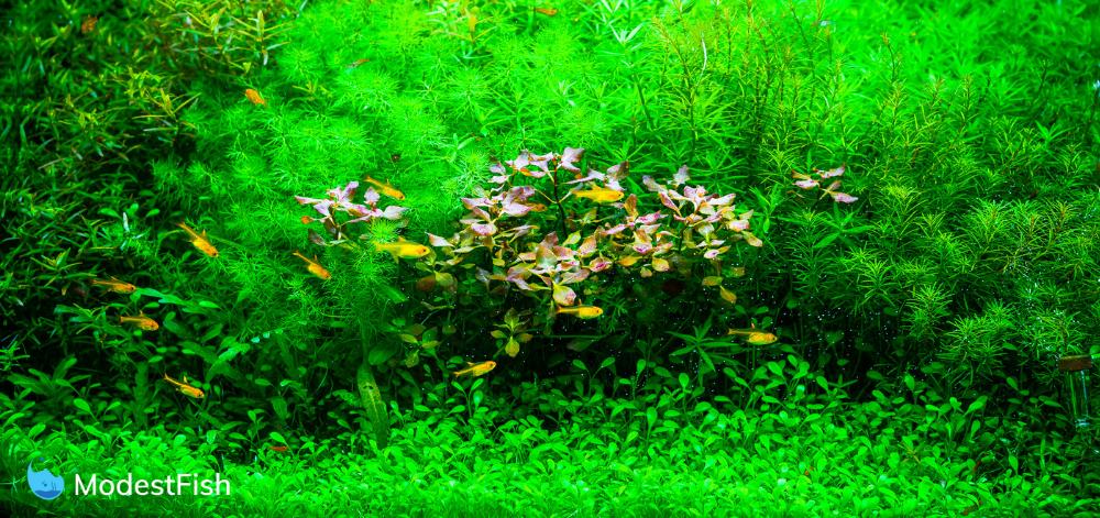 10 Best Aquarium Plant Fertilizer: Types & How to Choose