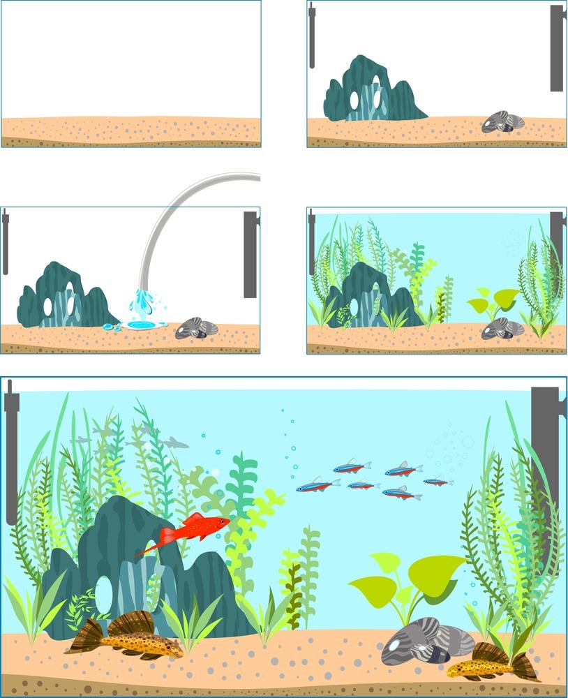 setting up fish tank