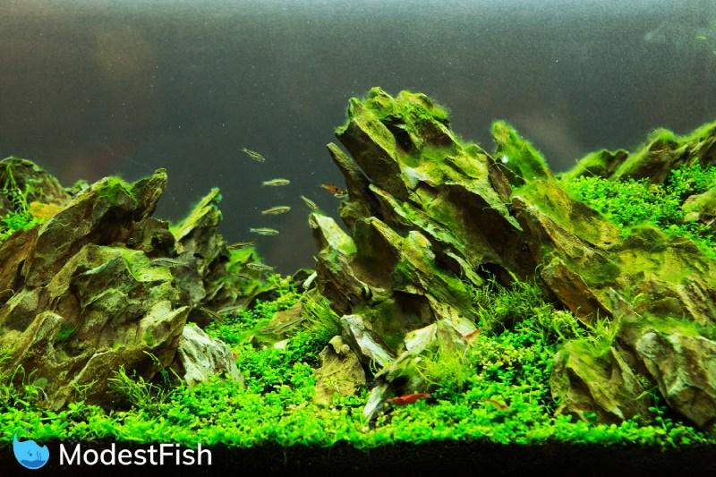 10 Best Carpet Plants For Stunning Aquarium Grass Beginner S Guide