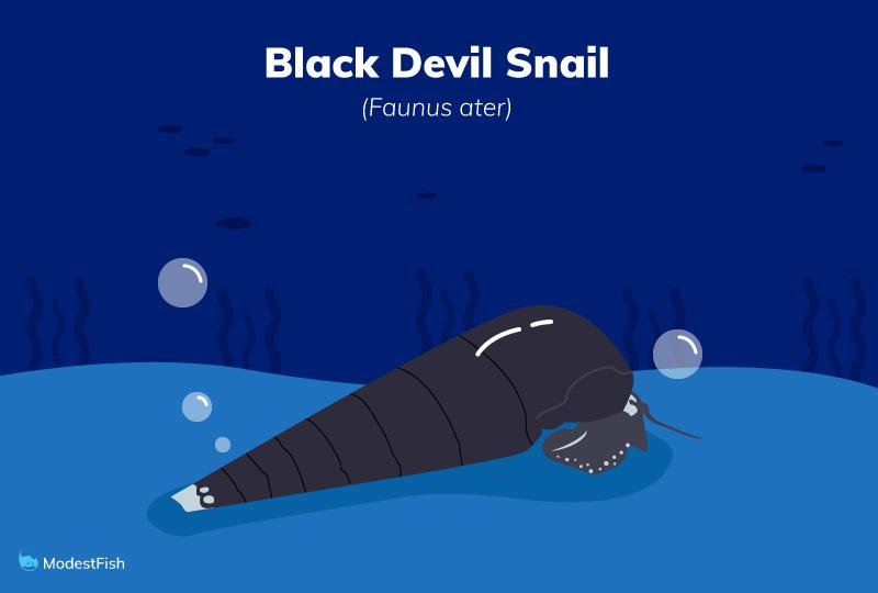 black devil snail