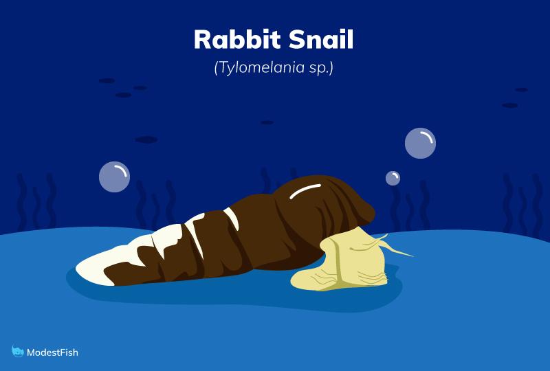 rabbit snail