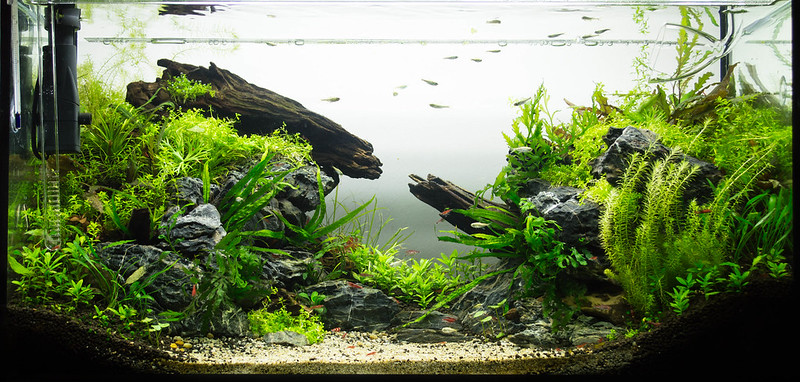 Aquascaping Completed Beginners Guide