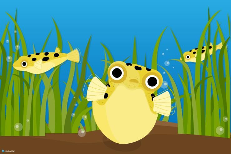 pea pufffer fish