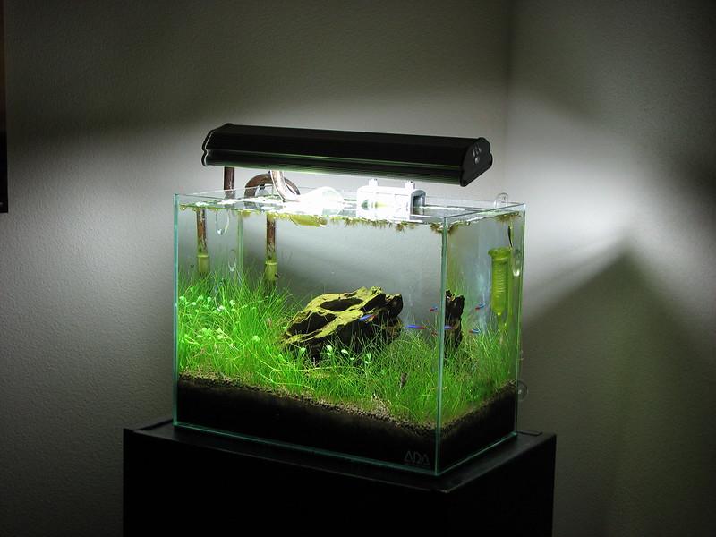 dwarf hairgrass being used in planted aquarium