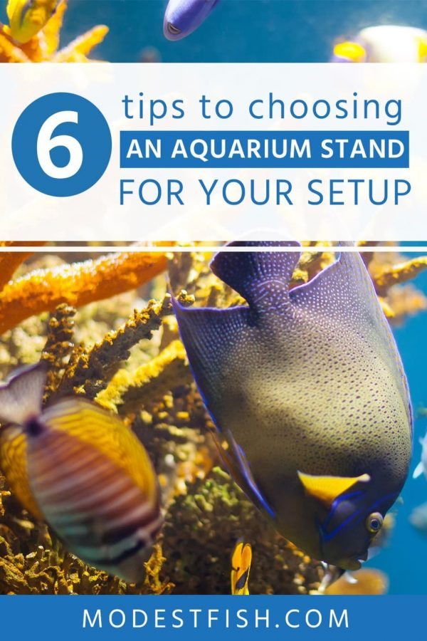 Are you looking for the best aquarium stand for your setup? Here's You'll learn exactly what you need to consider when choosing aquarium stand and how to choose the best one. #aquariumstand #modestfish