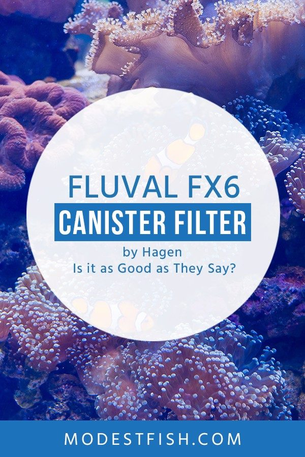 Fluval fx6 cainsiter from Hagen reviewed: In this guide, we'll break down the product and go through the features so you can learn why it's so highly rated #modestfish #aquarium #filter