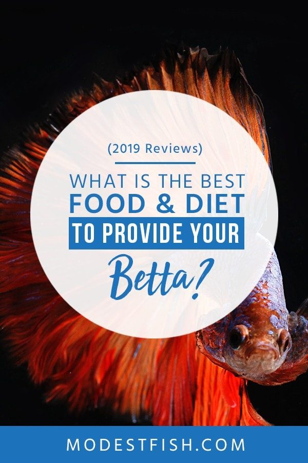 We will show what is the best food for betta ---You will learn how to choose betta fish food and covers topics such as how to make your own betta food, what type of diet a betta needs and how to avoid overfeeding. #betta #caretips #aquarium