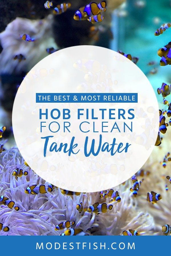 Looking for the best fish tank filter? You will discover how to choose HOB filter for cleaning guide from ModestFish that will teach what you need to know when buying your HOB filter. Covers topics such as filtration, water spouts and best water filter reviews. #fishtank #cleaning #filter