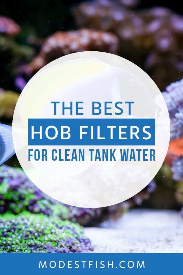 In this article, you'll discover what you need to know when choosing HOB filter for your fish tank - See the reviews of the best filter products to keep your aquarium clean. #fishtankfilter #ModestFish