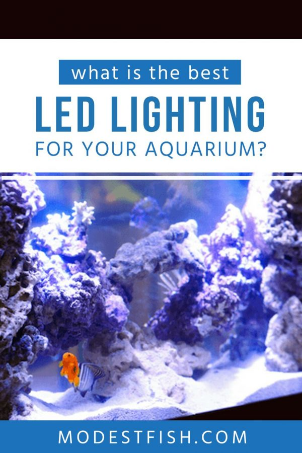 LED lighting is important for your fish, plants and corals in your aquarium. Read on this article we'll help you choose the best lighting for your aquarium and we've researched what you need to consider before purchasing . #modestfish #aquarium #fishtank