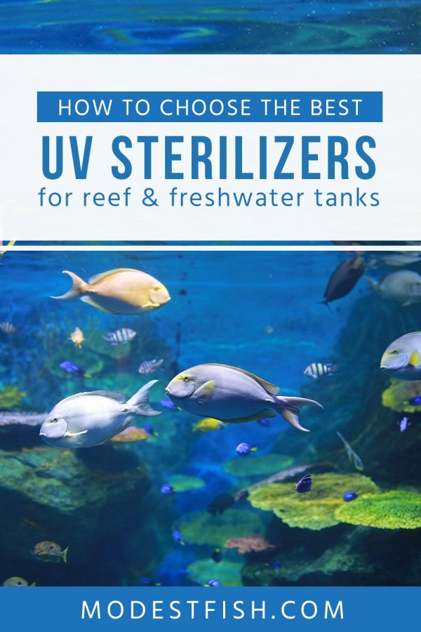 What are the UV Sterilizers? Read on to discover what they do and how do they work. Also you'll learn how to choose the best UV sterilizer for your set up that suitable for reef and freshwater tanks . #modestfish #filter #fishtank