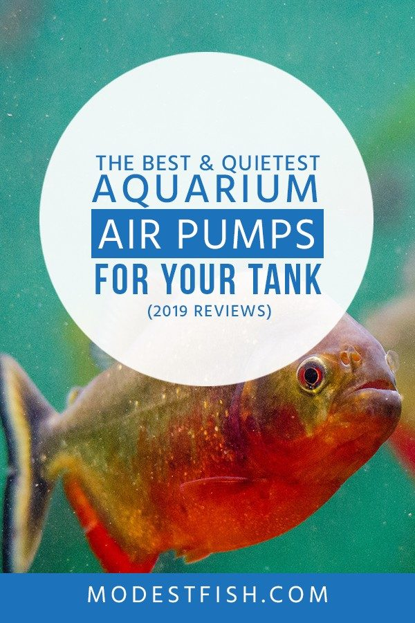 This is a detailed aquarium air pumps reviews from ModestFish that will show you what you need to look for when choosing aquarium air pumps for your fish tank. Also, you will learn the benefits of using an air pump, how to set up your air pump and we will share the best aquarium air pumps currently available. #aquarium #fishtank #products #ModestFish