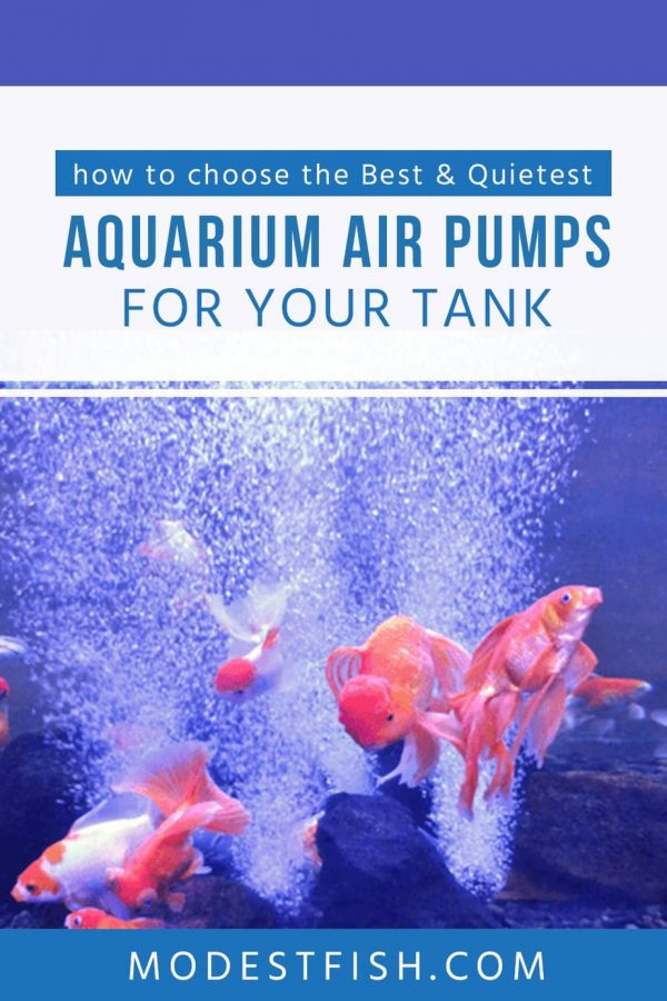 Air pump don't just create the bubbles in your tank but it can add some nice benefit for your fish and your plant life. Find out in this article, you'll learn what are the benefits of using air pump and we'll share with you some of the best fish tank air pump products currently available. #modestfish #fishtank