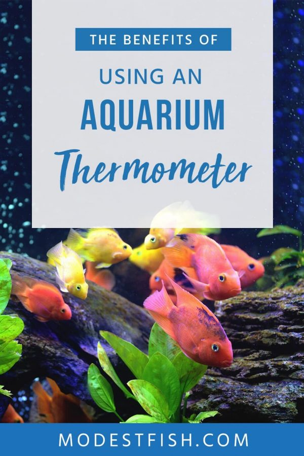 Get reviews for the best affordable thermometers available today. Including a guide on how to choose an accurate, reliable, & durable thermometer. #modestfish #aquarium #heater