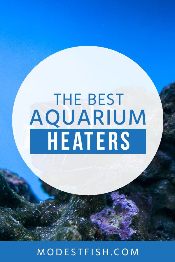 If you're looking for a heater for your fish tank. Here's you will learn what to look for when you're going to buy one - See some recommendations of the the best heater products to keep good water temperature for your healthy fish. #aquariumheater #ModestFish