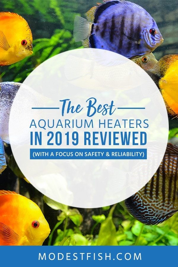 The Best Safe & Reliable Aquarium Heaters Available in 2019