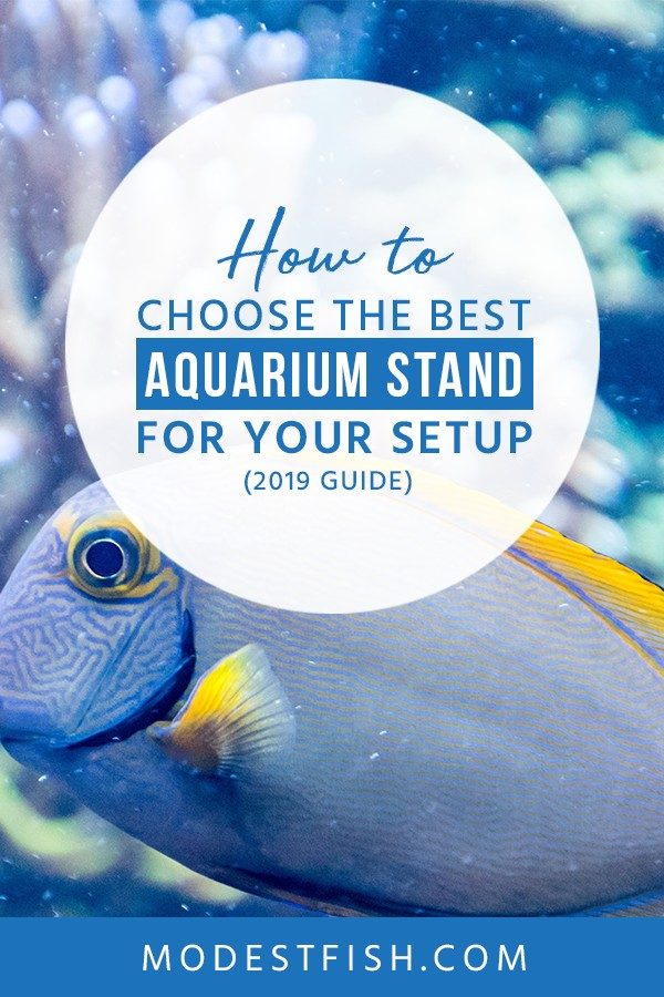 Looking for the best aquarium stand? You will learn how to choose aquarium stand for your setup. Covers topics such as how to consider the Size, weight, and shape of your aquarium, what material is the stand made out of and more . #aquarium #aquariumstand #aquarium10gallon #ModestFish